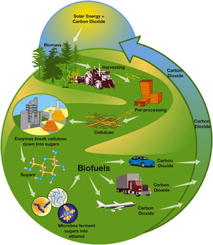 sustainable energy biofuels
